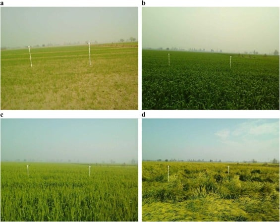 Article: Monitoring crop phenology using a smartphone based near-surface remote sensing approach