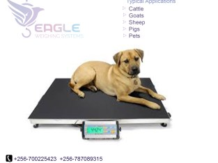 Pet platform wegihng scales