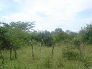 17 acres of land for sale in Kangulumira, Kayunga District