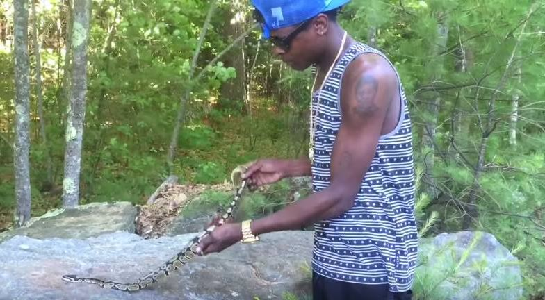Chameleone plays with a snake