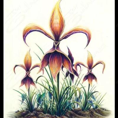 Natural Fleur De Lis