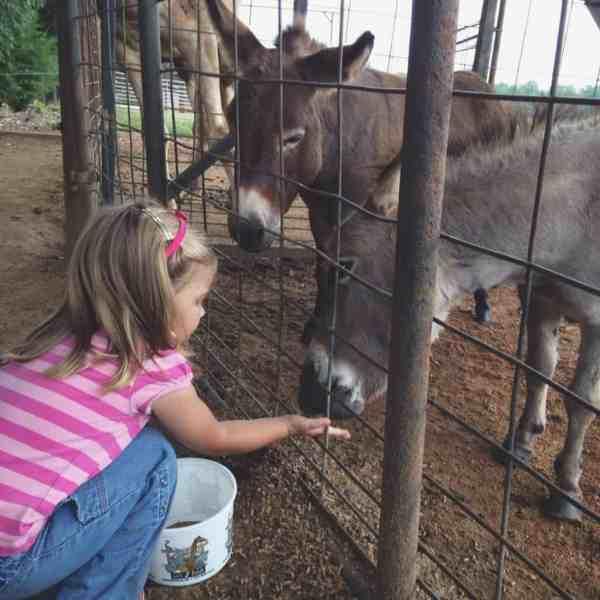 Emmy and mini donkey
