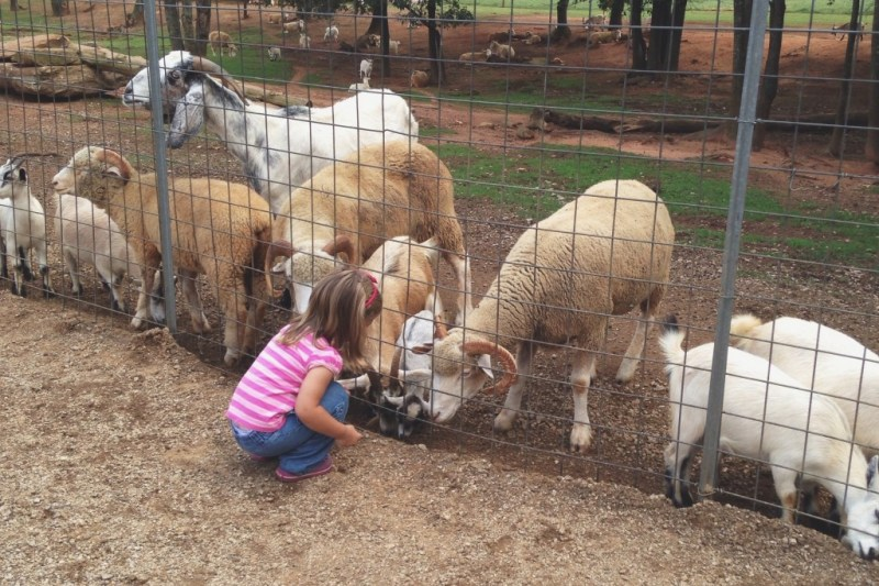 Add her animals