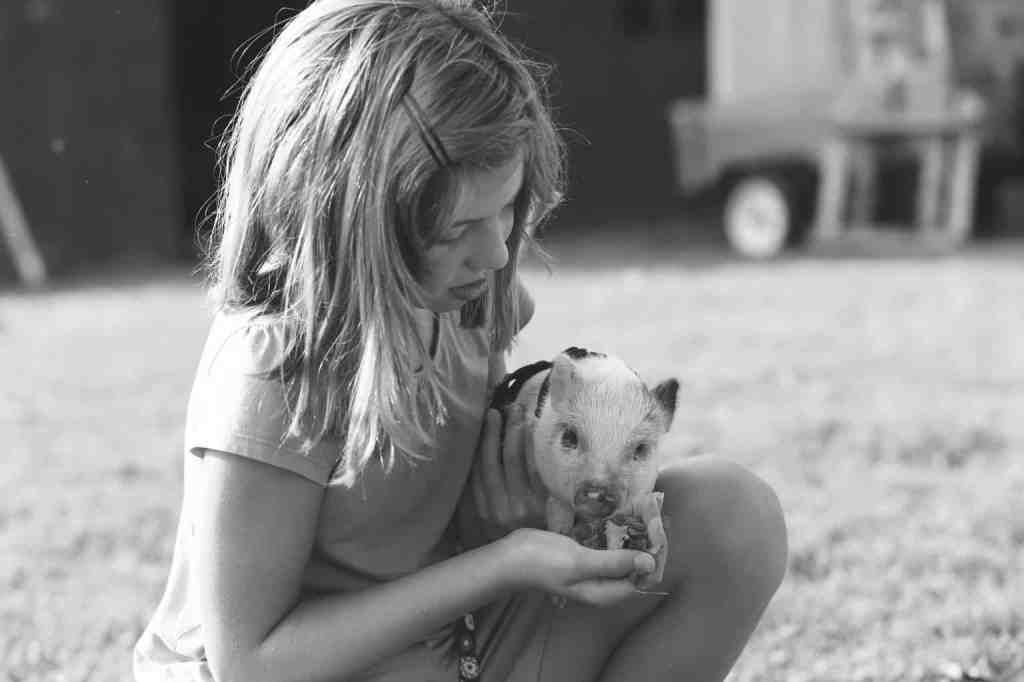 Feeding the baby piglet
