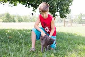 Farm Cat Adventure