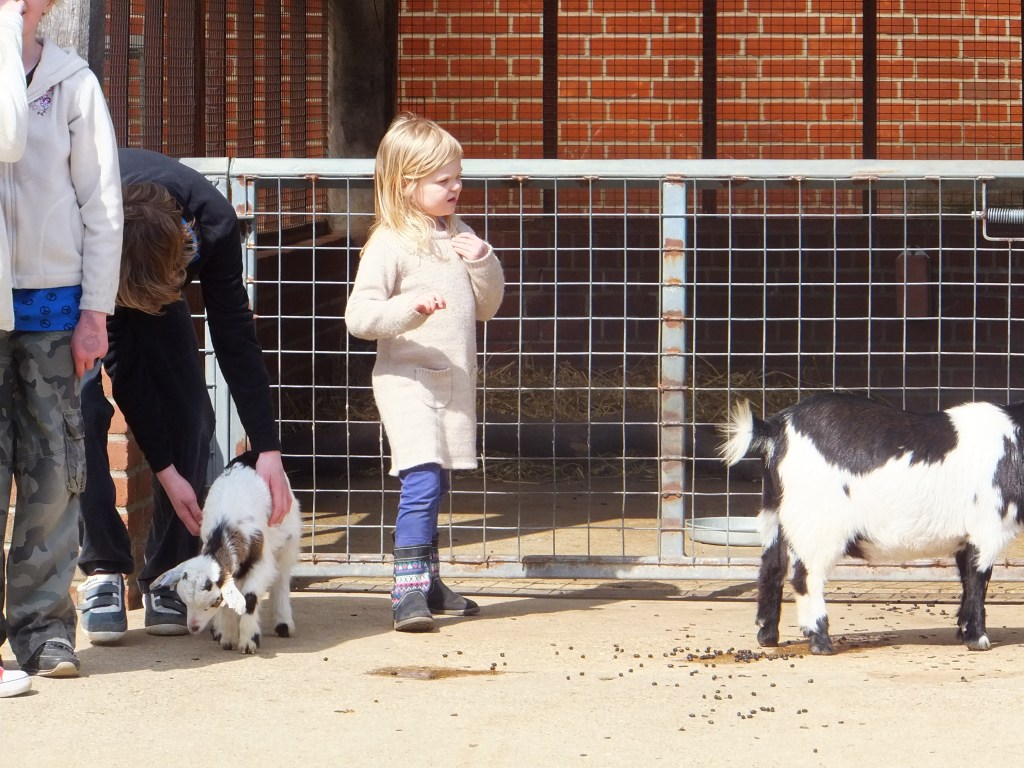 children in the farm area with the goats at Africa Alive
