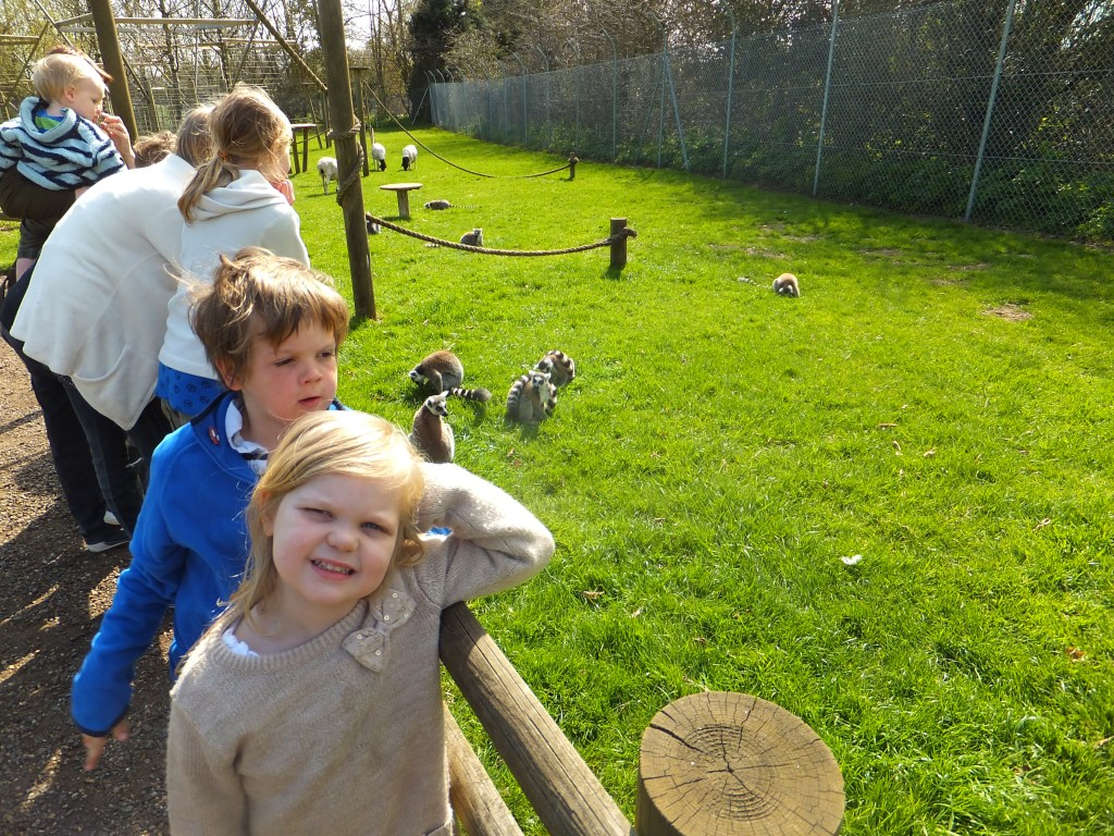 children watching the ting tailed lemurs at Africa Alive
