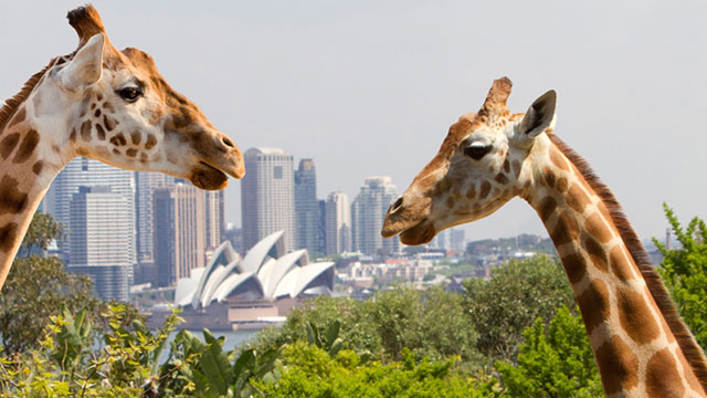 Top 7 Things To Do In Sydney Taronga Zoo