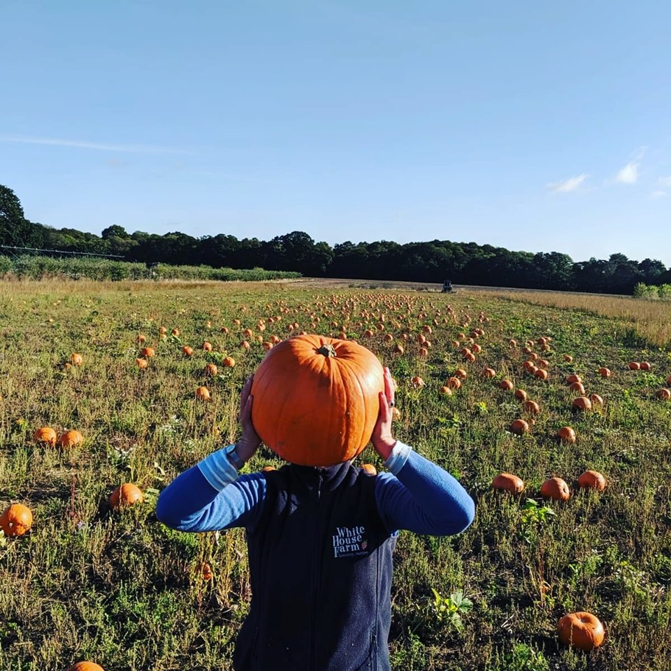 Pumpkin Patches In Norfolk White House Farm