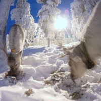 Enchanted Husky Sledding, Finland