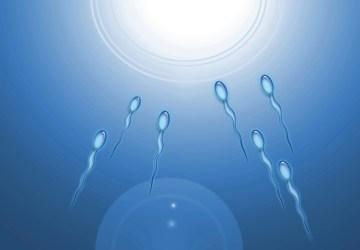 sperm-tests