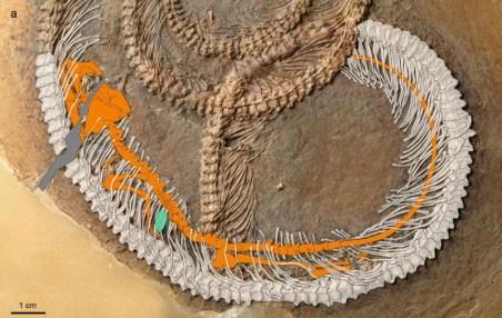 snake-fossil-image