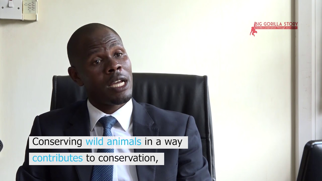 The Forest that Gorillas have Made – youtube