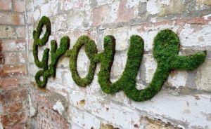 Moss Grow