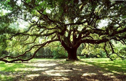 Wedding Anniversary Tree