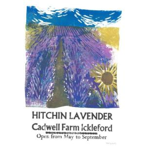 Lino print of the Hitchin Lavender Fields