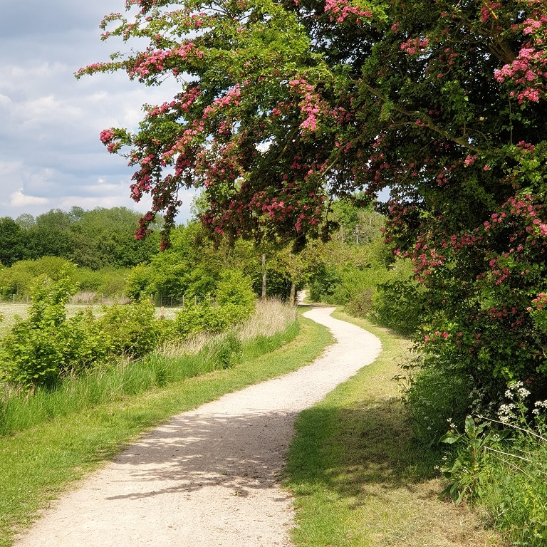 The Greenway track and blossoming trees