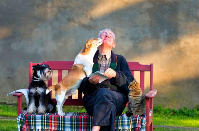 pet-elderly-seniors-benefits-big-hearts