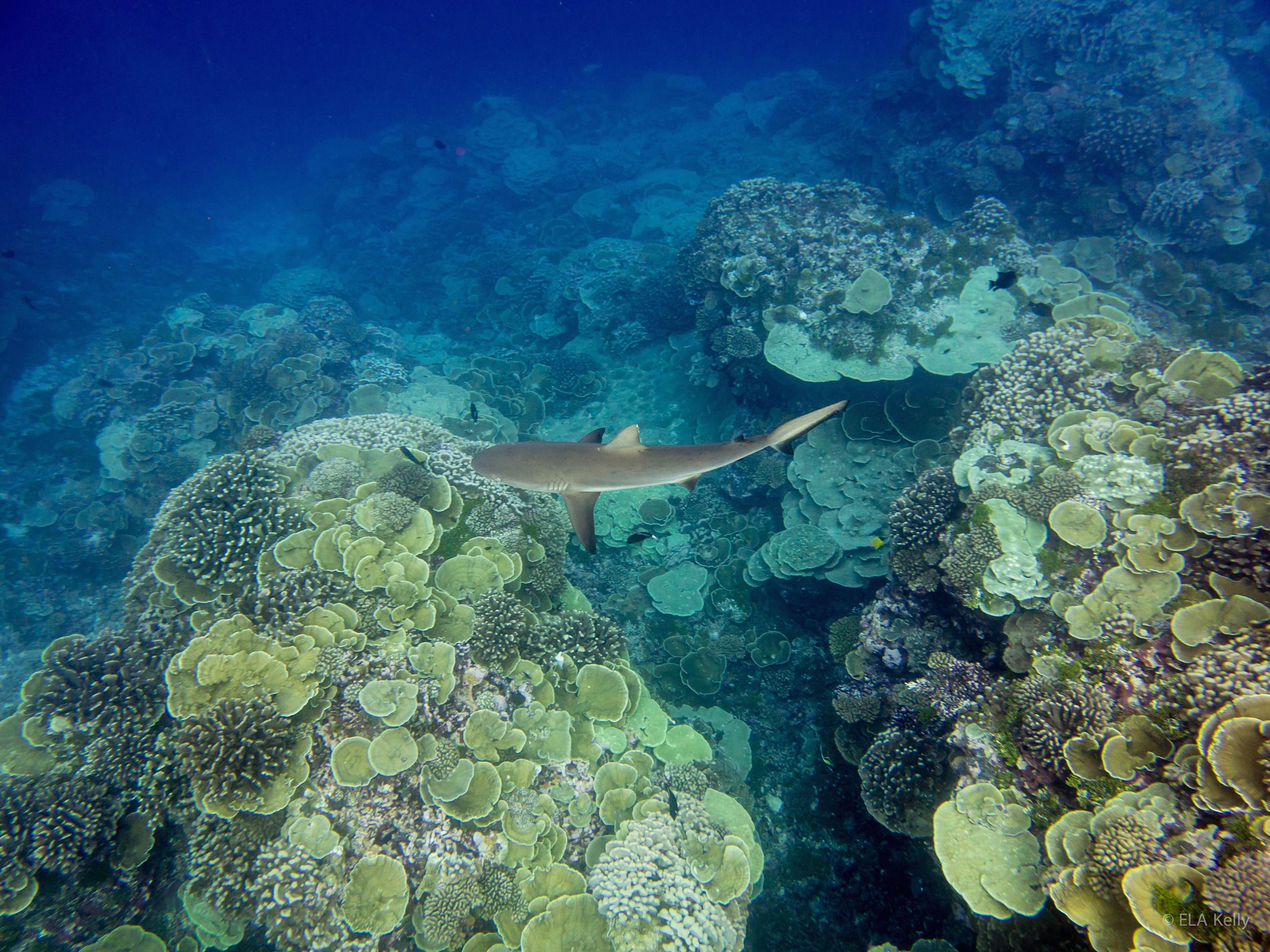 Bacteria Surrounding Coral Reefs Change In Synchrony