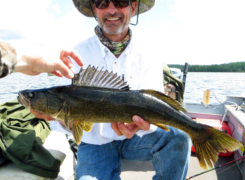 """24"""" Walleye Basswood Lake Boundary Water Canoe Area"""