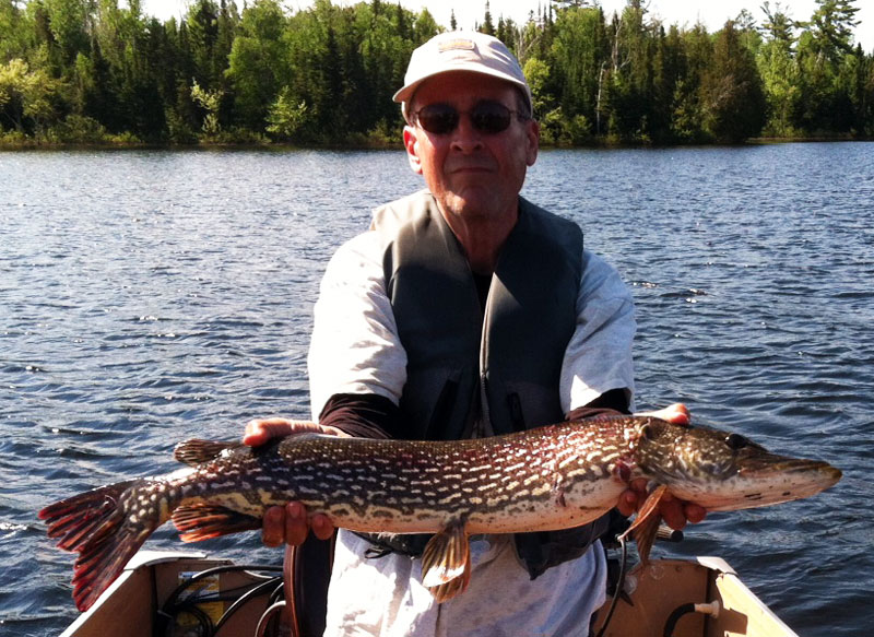Northern Pike Boundary Waters Canoe Area Basswood Lake