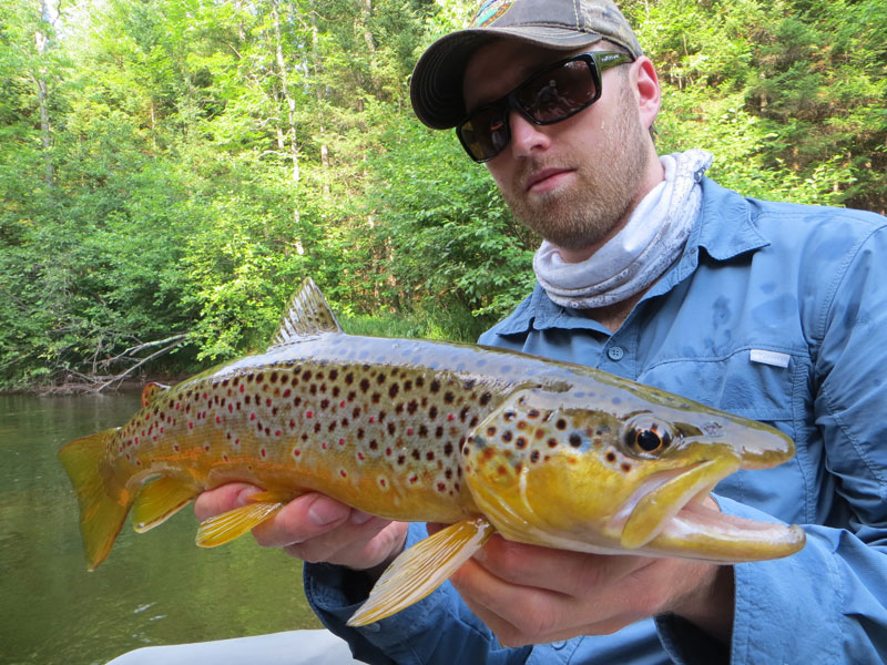 Dry Fly Fishing Brown Trout Brule River Kayak Wisconsin
