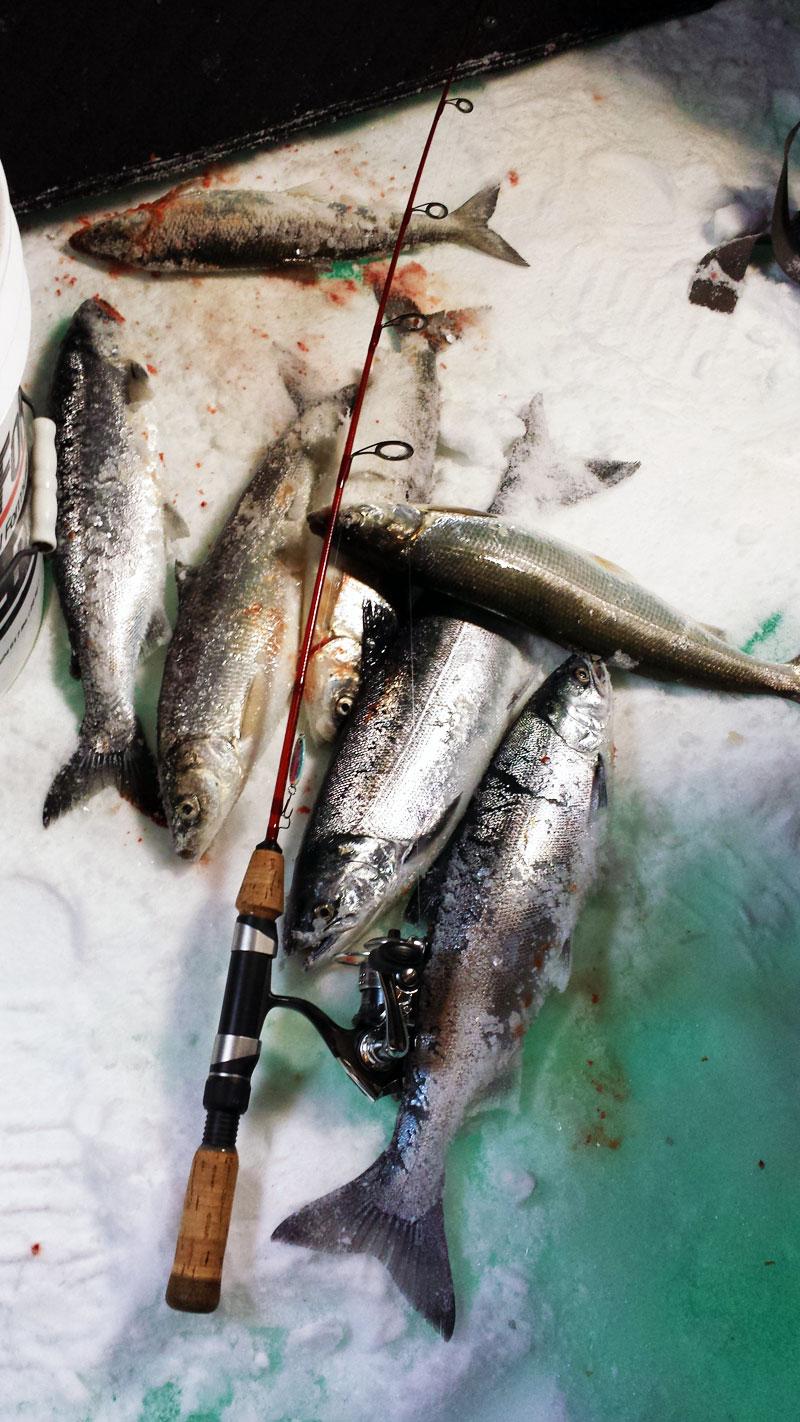 Ice fishing Herring and Coho Salmon on Lake Superior