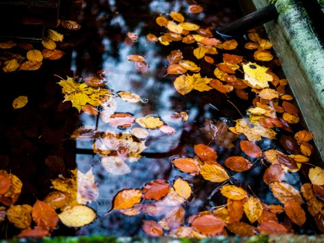 leaves in water #südwestkirchhof copyright andreas reich 2013