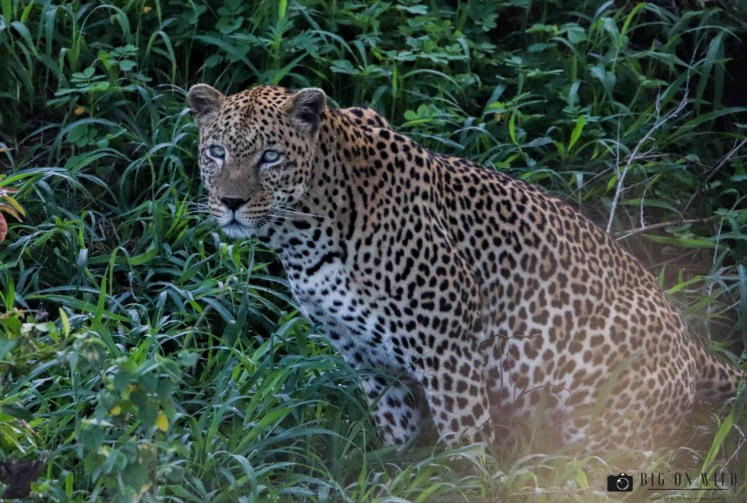 The Best Season to Visit the Kruger National Park