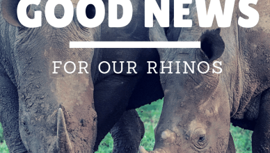 Good News for Our Rhinos