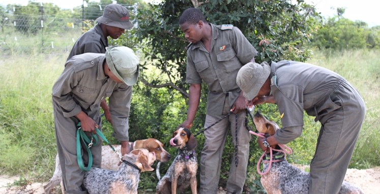 Tracking Dogs from the USA to Help With Poaching