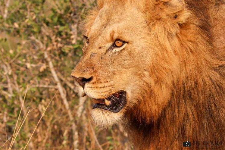 Kruger Diary September 2018