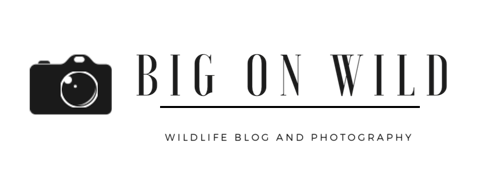 Big on Wild – Wildlife Blog and Photography