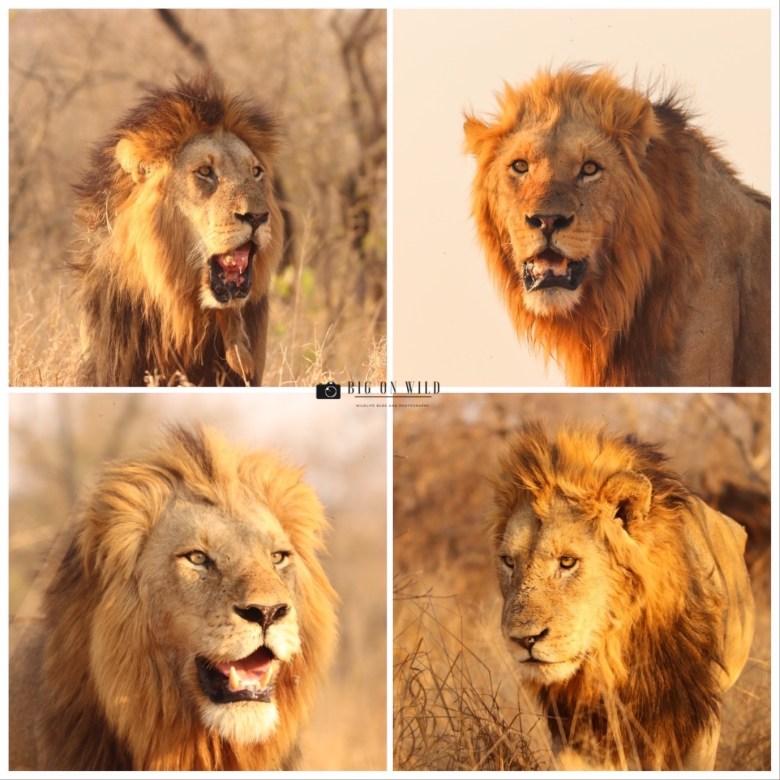 S26 Lion Coalition