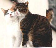 1-cat-love