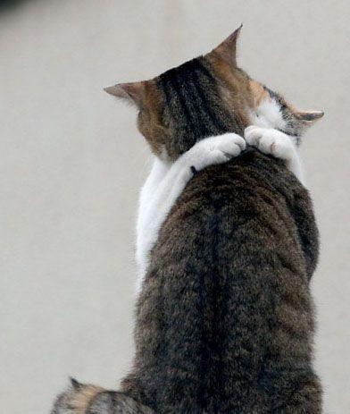 8996d1236094228-cat-bong-cat_love1
