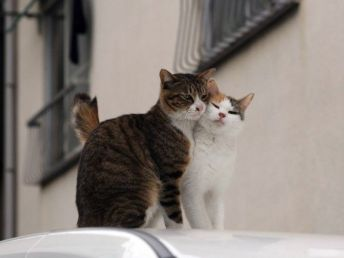 Cats_love