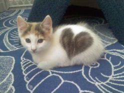 Gato-corazon-1