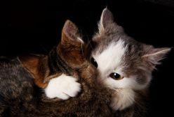 amor-de-gatos-love-cats