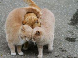 cat-love (1)