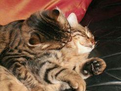 cats_love_01