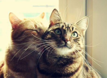 cats_love_by_saara_q-d46r67b