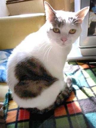 gato-blogspot-corazon