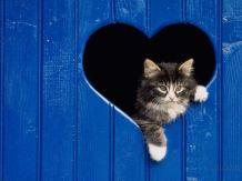 gatos-y-amor-_064