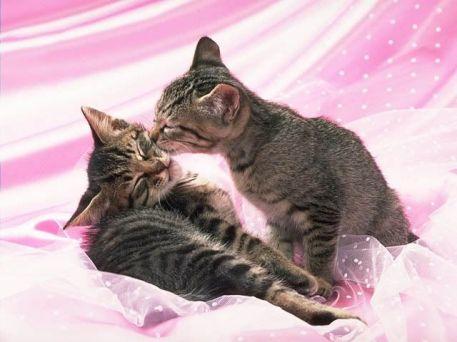 gatos_amor