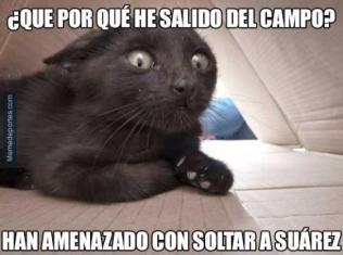 porque-salido-gato-negro-camp-nou-final-140891781077705840