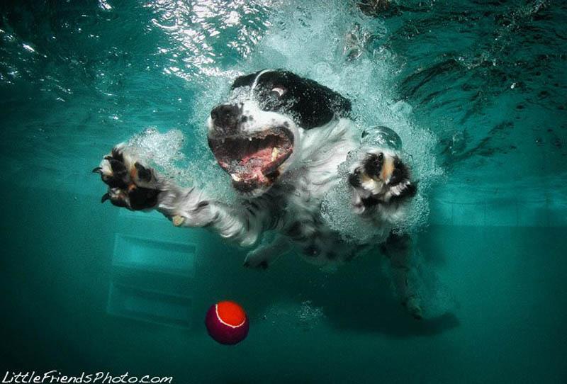 underwater photos of dogs seth casteel 7 Невероятный позитив: Собаки ловят мячик под водой