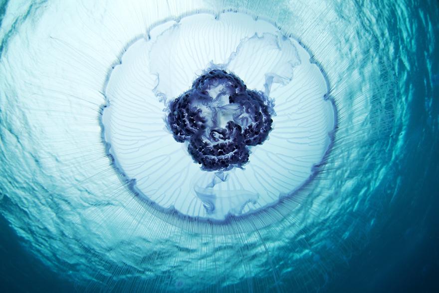 3140 Подводные чудеса Белого моря на фото Александра Семенова