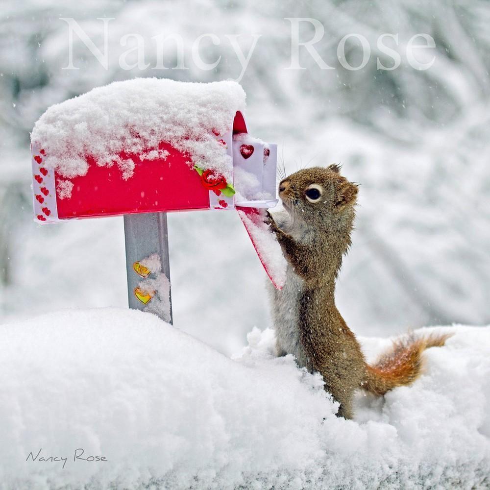 squirrels03 Забавные белочки Нэнси Роуз
