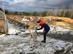 feeding a goat at a new village farm shadow day
